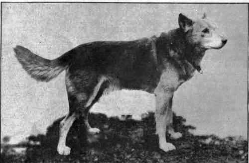 Ученые доказали существование древнейшей породы собак