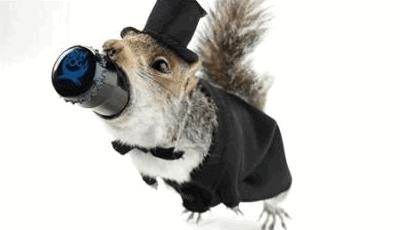 BrewDog выпустили пиво в чучелах белки и горностая