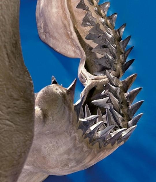 Самые большие акульи челюсти в мире уйдут с молотка Heritage