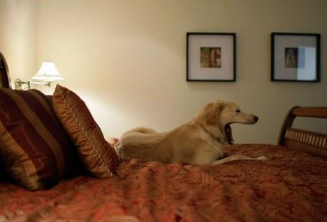 Отель для животных в дубае недвижимость в оаэ недвижимость в дубае
