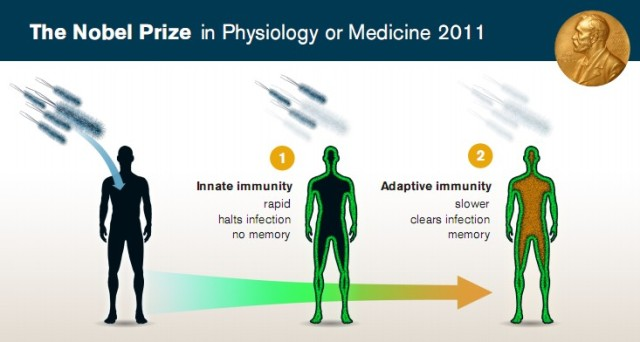 Нобелевская премия по физиологии и медицине 2011