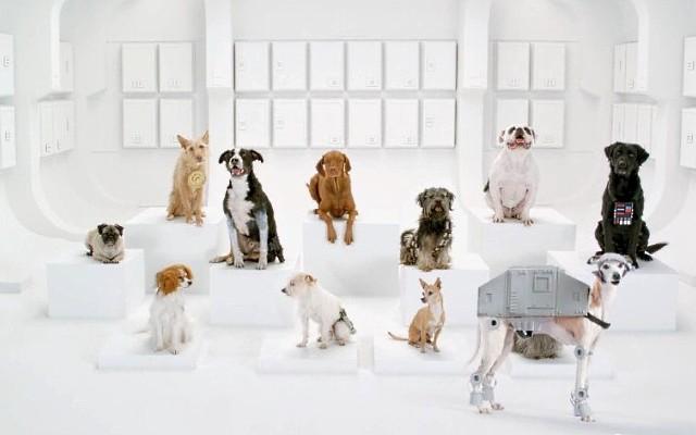 Volkswagen уговорил собак спеть под Star Wars
