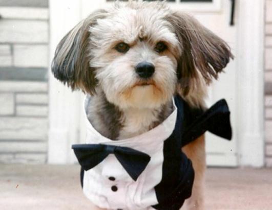 Любимого пса клонировали за $ 50 000