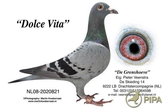 Самый дорогой почтовый голубь в мире продан за $ 330 тысяч