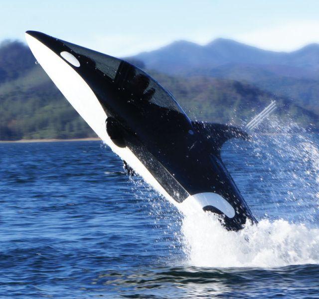 Субмарина Killer Whale нырнет за $ 100000