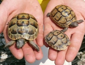 Черепахи - древнее динозавров