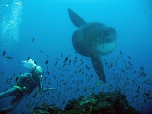 Самая медлительная рыба в мире