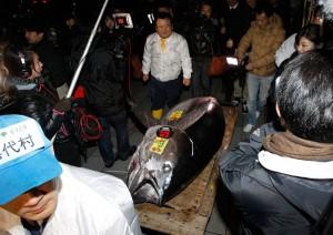 Самый дорогой тунец в мире стоит ,7 млн