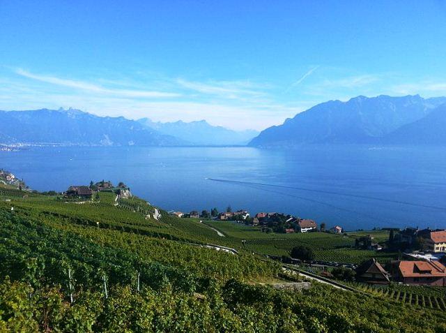 Vine Terraces Switzerland