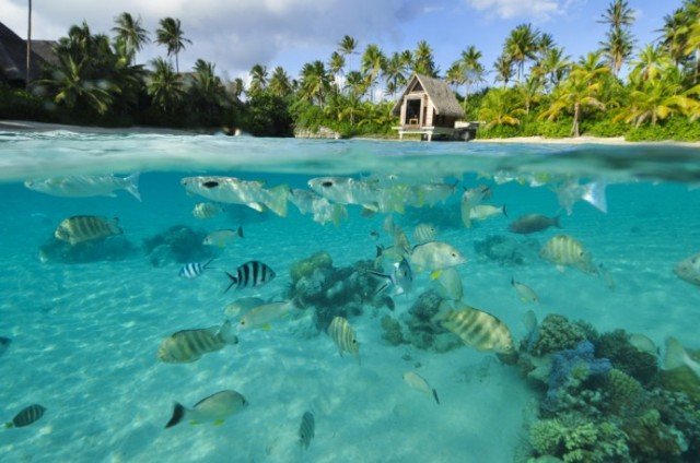 The InterContinental Bora Bora Resort & Thalasso Spa 3