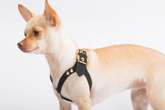 Самая дорогая собачья шлейка от Brikk