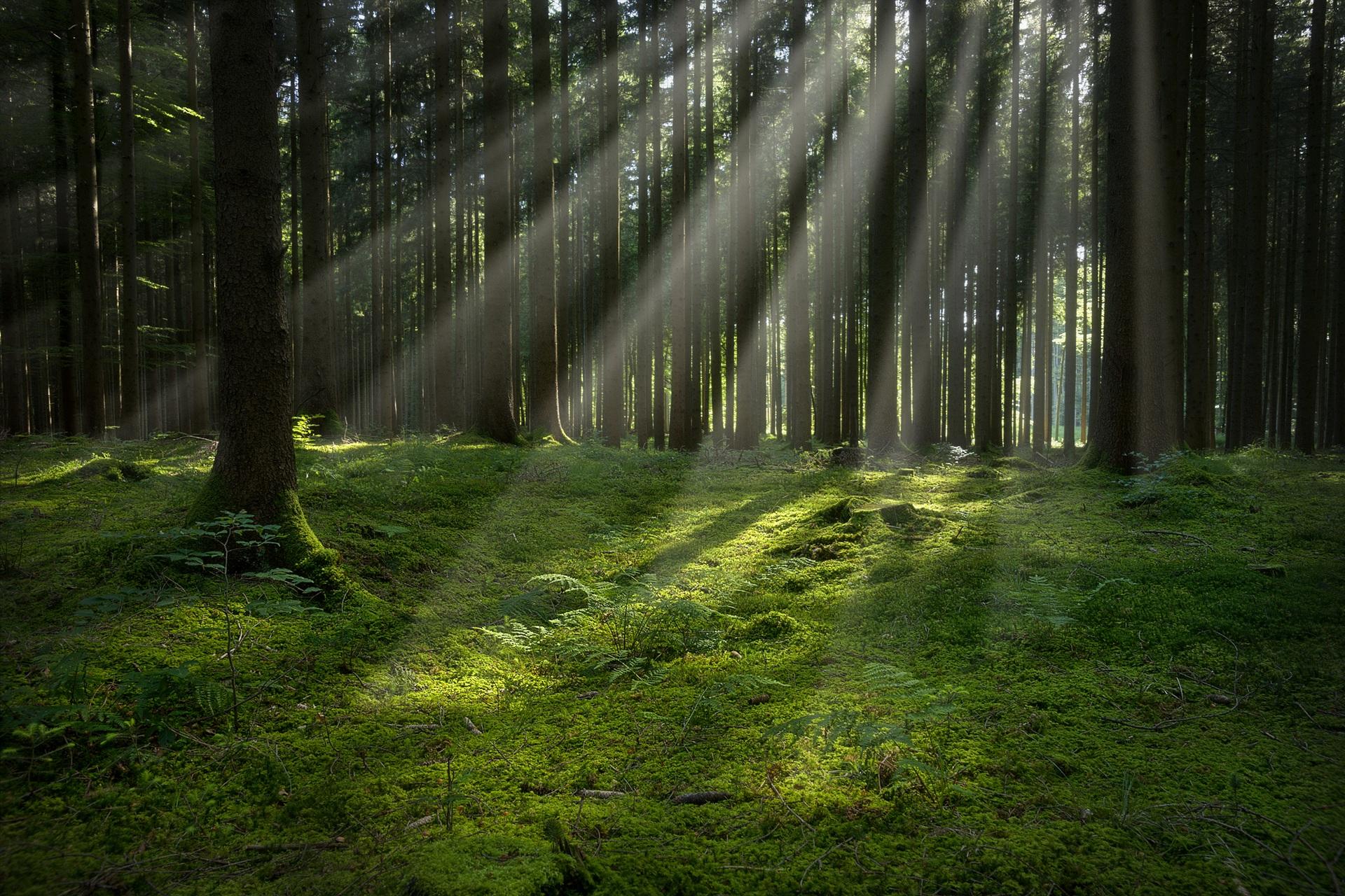 Німеччина та WFF допоможуть зберегти ліс Карпат