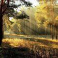 Лес на рассвете - красота и релакс