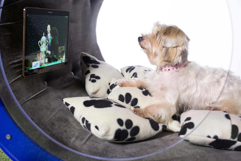 Samsung dog kennel 2